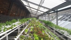 A Greenhouse Humidifier: Benefits of Using Smart Fog in the Food Industry